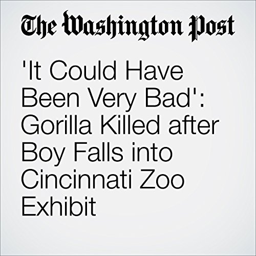 'It Could Have Been Very Bad': Gorilla Killed after Boy Falls into Cincinnati Zoo Exhibit cover art