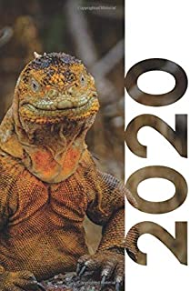 2020: Stocking Fillers For 12 Year Old Boy Iguana lizard Compact Planner Calendar Organizer Daily Weekly Monthly Student Diary for researching secret santa gifts for veterinarians
