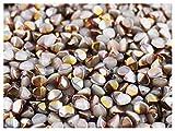 Pinch Bead, 5x3.5mm, 50 piezas, cuentas de vidrio prensado triédrica checas en forma de semillas de trigo sarraceno, White Alabaster/Sliperit (opal white, half orange rainbow metallic)