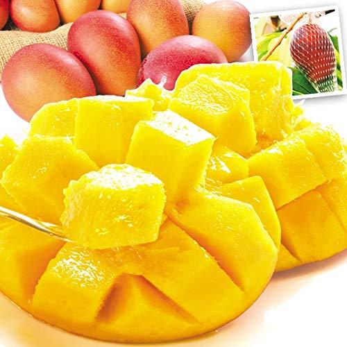 国華園 宮崎産 ふぞろいアップルマンゴー 1�s 1組 南国フルーツ