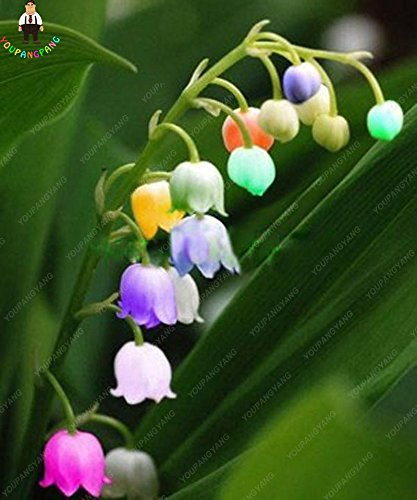 100pcs 20 types d'orchidées Graines vivaces Fleurs Plantes ornementales en pot Bansai Semences pour balcon et cour plante Diy jardin gris foncé