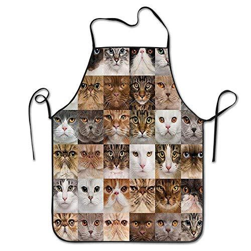 N\A 36 Katzenköpfe Rasse Britisch Kurzhaar Türkische Angora Blick auf Kamera Kochen Küche Restaurant Bar Schürze Schicke Schürze Chef Schürze Unisex Schürze