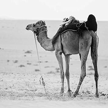 Don't Break Camel's Back Mountain!