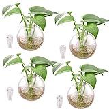 Fioriere in vetro da appendere a parete,4 pezzi Vasi in vetro da parete Terrari a bolle da parete Fioriere a parete Supporti per piante d'aria Contenitore per terrari Vaso per fiori secchi Tillandsia