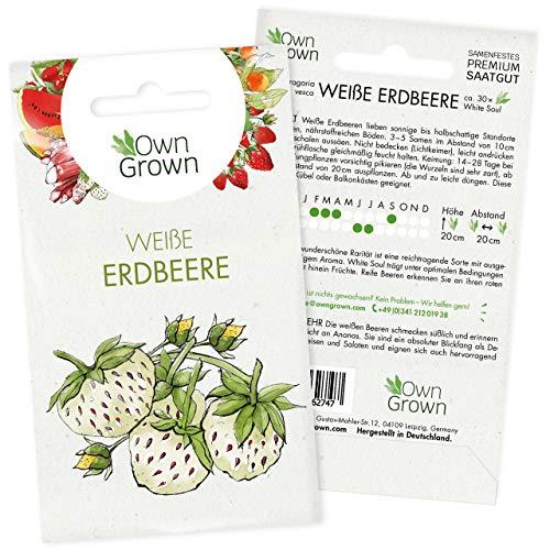 Weiße Erdbeeren Samen: Premium Walderdbeeren Samen für 30 weisse Erdbeeren Pflanzen zur Aussaat – Saatgut Erdbeere zum Pflanzen – Obst Samen, weiße Erdbeerpflanzen Saatgut – Erdbeere Samen v. OwnGrown