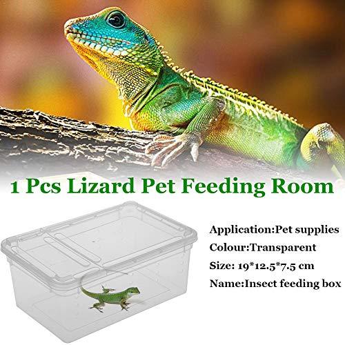 Caja de plástico Transparente Terrario de Reptiles de Insectos Cría Clara Caja de alimentación de Alimentos Vivos Serpientes Lagarto Ranas Casa