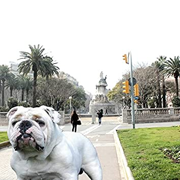 Dogs of Barcelona