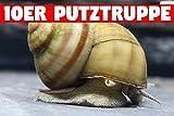 Teich Sumpfdeckelschnecke, 10 st.. + 1 NH TOXEX BALL - ( Faden ) Algen und Laubfresser / Gesundheitspoilzei im Gartenteich!