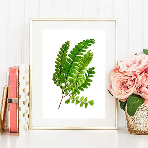 Din A4 Kunstdruck ungerahmt - Farn Farnwedel grün Aquarell Natur, Gemälde, Deko, Geschenk Druck Poster Bild