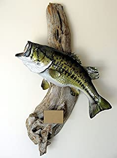 Home Comforts Taxidermy Large Mouth Bass Trophy Fish Mount Bass Laminated Poster Print 24 x 36