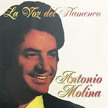 La Voz Del Flamenco