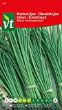 Cebollino Allium schoenoprasum , hierba fresca, con un fino sabor a cebolla.