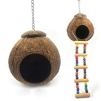 SDFLKAE Nichoir pour oiseaux en coquille de noix de coco naturelle, petite taille, cage avec échelle