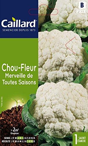 Caillard PFCC11803 Graines de Chou Fleur Merveille de Toutes Saisons