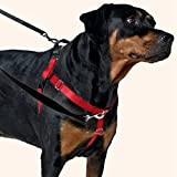 2 Hounds Design Freedom No-Pull Dog Harness and Leash, Adjustable Comfortable Control for Dog Walking, Made in USA (Large 1') (Teal)