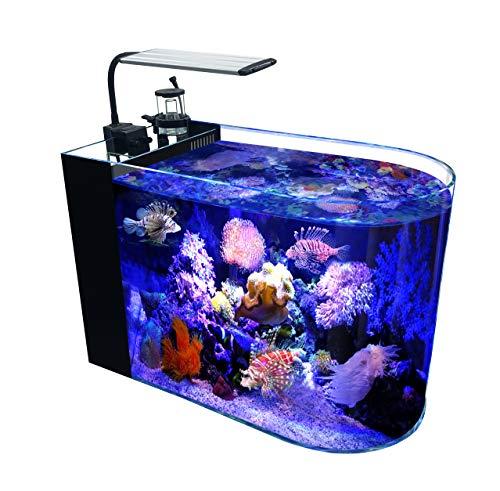 GankPike 12 Gallon Saltwater Aquarium Full Bullnose Shape Low Iron Aquarium Ultra Clear Glass Marine Fish Tank Reef Tank with Lid, Protein Skimmer, LED Light, Heater, LCD Digital Thermometer and Pump