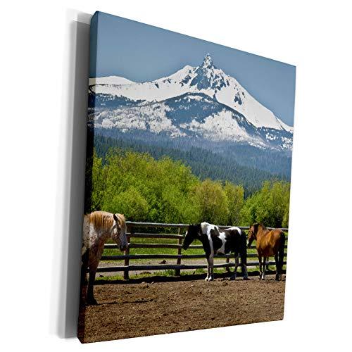 3dRose Danita Delimont - Horses - Horses at Black Butte Ranch, Mount Washington, Sisters, Oregon, USA - Museum Grade Canvas Wrap (cw_209647_1)