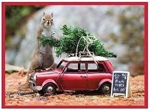 Secret Life of Squirrels Half Notecards