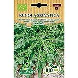 Germisem Orgánica Rucola Selvatica Semillas de Rúcula 2 g