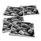 Pegatinas rectangulares de vinilo (juego de 4) – BW – Acuario Piranha Fish Divertido Calcomanías para portátiles, tabletas, equipaje, reserva de chatarra, frigoríficos #35929
