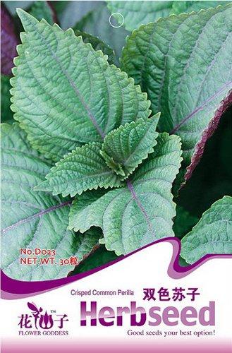 Achetez 2 Obtenez 1! (Peut accumuler) 1 pack 30 SEED Perilla japonais Herb Shiso frutescens D023