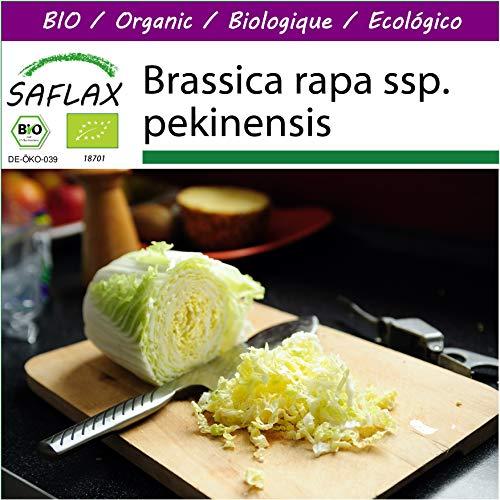 SAFLAX - Big Garden - BIO - Chinakohl - Granat - 40 Samen - Mit Gewächshaus, Töpfen, Anzuchtsubstrat und Dünger - Brassica rapa