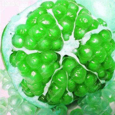 30pcs/sac Heirloom Seeds grenade vivace géant non-OGM bio Succulent Bonsai Jardin Arbre Plante en pot pour Flower Pot 4