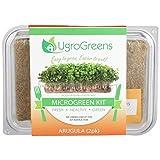 Arugula Microgreen Kit
