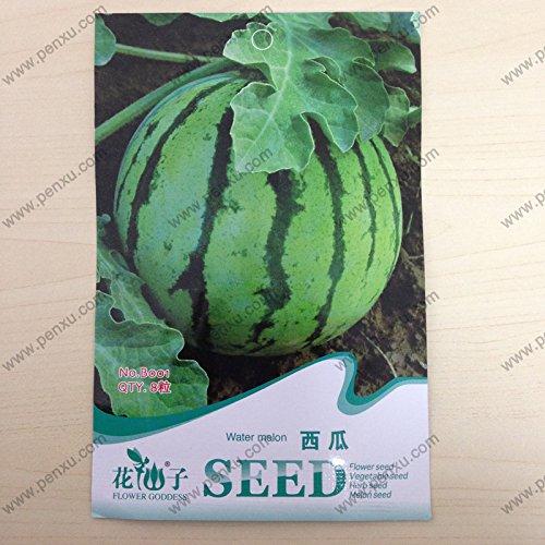 La vente du expédition 9 classes plus facile culture de légume et fruits semences, Melon, Pepino, piment, strawberryhot salehot salehot vente