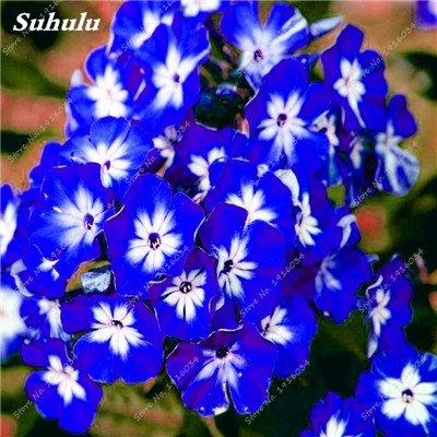 100 Pcs rares Nerium Graines Oleander Plantation Saisons de fleurs en pot Plantes culture facile Chine Graines Balcon Jardin Décoration 1