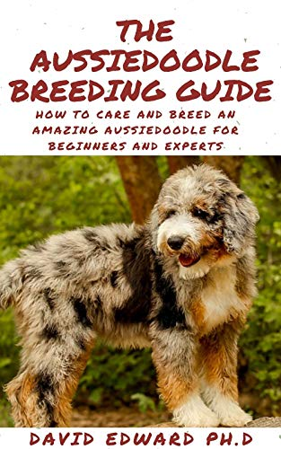 THE AUSSIEDOODLE BREEDING GUIDE : How To Care And Breed An Amazing Aussiedoodle For Beginners And Experts (English Edition)