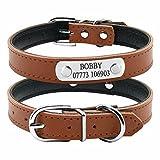 BERRY - Collar para Perro o Gato Acolchado de Piel sintética Suave, Color Azul/Rojo/Negro/Rosa, XS/S/M