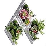 LIYONG Plantas suculentas Artificiales Decoración de Pared, Impresiones de Arte Decorativo y Plantilla de Colgante Marco Blanco 3pieces Conjunto