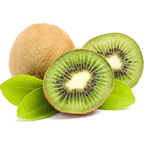 Semillas de kiwi 20 piezas (Actinidia Chinensis) Semillas de plantas orgánicas frescas de primera calidad fáciles de cultivar para plantar jardín en casa