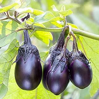 Patio Baby Eggplant 40+ Fresh Organic Seeds for The 2019 Season