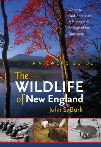 The Wildlife of New England: A Viewer's Guide (Unh Non-Series Title)