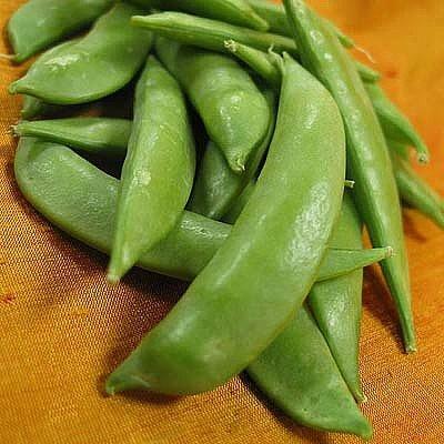 Sugar Snap Peas Seeds - 13 Grams