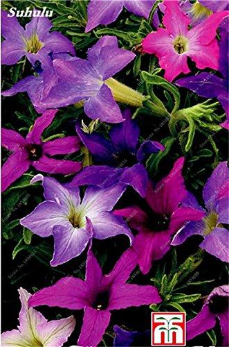 50 Pcs Pétunia Graines de fleurs pétunias Jardin Bonsai Balcon Petunia hybrida Flower Seed Plantes décoratives pour jardin 16
