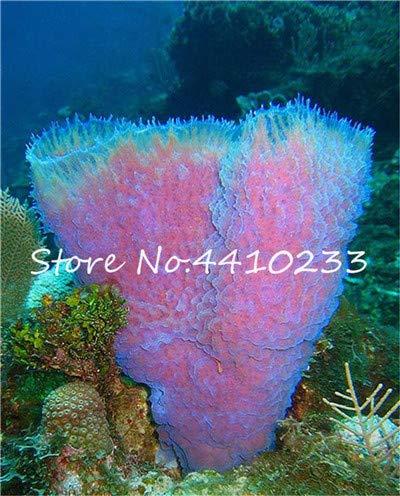 Bloom Green Co. 200 Stück Diy Fisch-Behälter im Wasser Bonsai Anlage für Aquarium Moss Für Hausgarten Einfach Wasser Pflanzen wachsen hoch Keimung: j