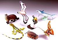 カプセルQミュージアム 日本の動物コレクション7 八重山諸島/ヤマネコの島 ノーマル全7種