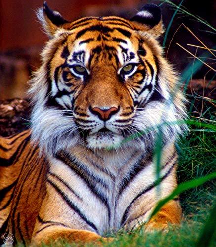 TEXTIL TARRAGO Fouta Estampado Gigante Impresion Digital fotografica 4D 210x240 cm 100% Algodon Tigre