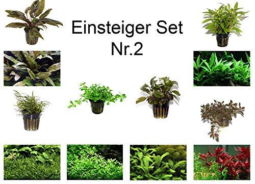 Tropica Einsteiger Set 6 einfache Topf Pflanzen