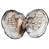 Perle de culture d'eau douce ovale Perles 6–7mm huîtres avec perles à...