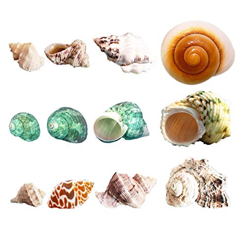 Luckybaby Hermit Crab Shells Growth Turbo Seashell Natural Sea Conch