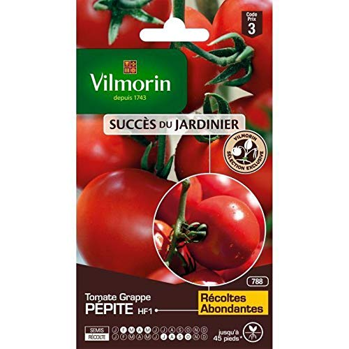 Pépite Hf1 Tomate