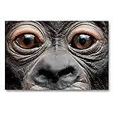 CALVENDO Toile de qualité supérieure 90 cm x 60 cm, Bonobo VISOLA | Tableau sur châssis | Impression sur Toile sur Toile véritable | Un Motif de Matthias Besant Animaux Animaux
