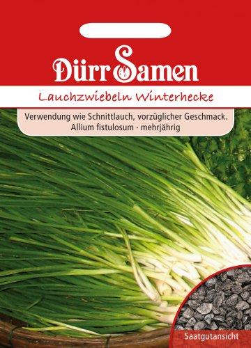 Dürr Samen 0199 Lauchzwiebel Winterhecke (Lauchzwiebelnsamen)