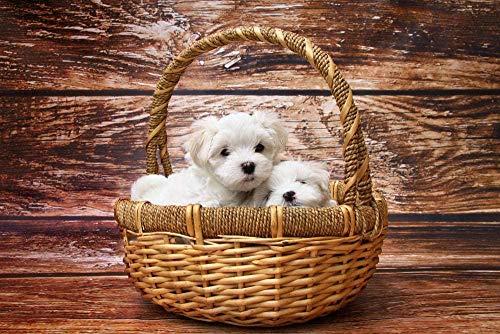 Twee Witte Puppies Op Bruine Rieten Mand Hobby Woondecoratie Diy Legpuzzel - 1000 Stukjes-Decompressiespel Voor Volwassen Kinderen Met Houten Puzzelspeelgoed Unieke Woondecoraties En Geschenken