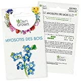 Graines de Myosotis des bois : Kit graine de fleurs vivaces pour environ 100 Myosotis - Plante jardin à semer et à...