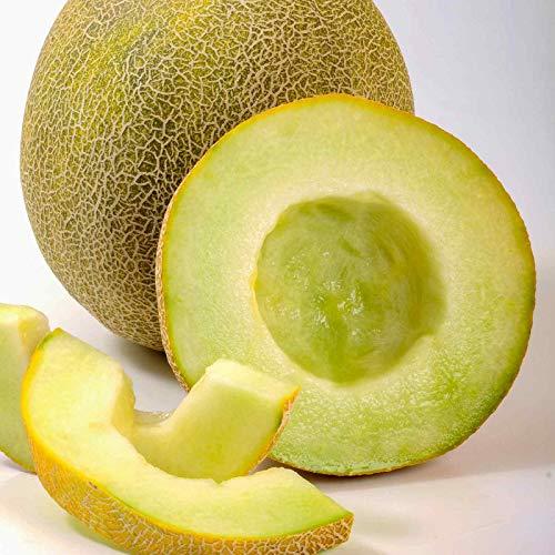 Melon Garden Seeds, Galia - Gallo - 100 Seeds - Non-GMO,...